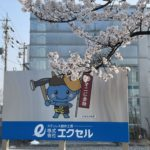 桜の木の様に…